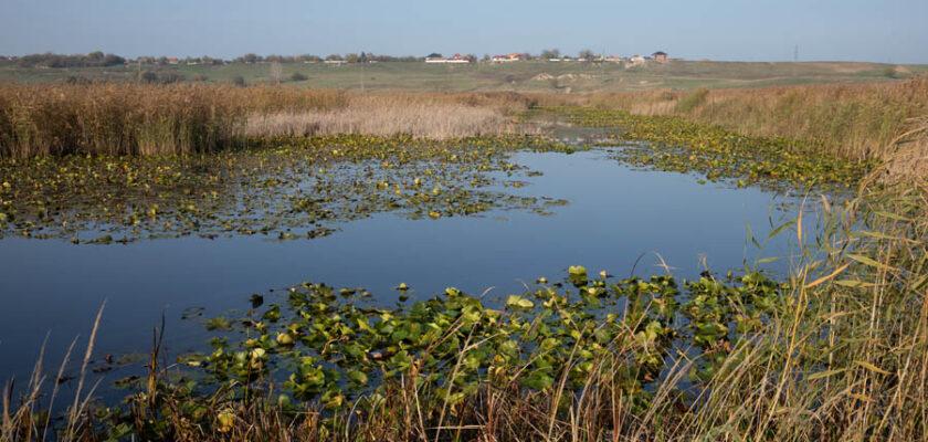 50 de specii acvatice protejate vor beneficia de pe urma lucrărilor de reconstrucție ecologică de la Gârla Mare
