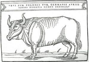 Bour în ilustrație din 1556 Zimbrul în folclorul românesc Illustration-from-Sigismund-von-Herbersteins-book-published-in-1556
